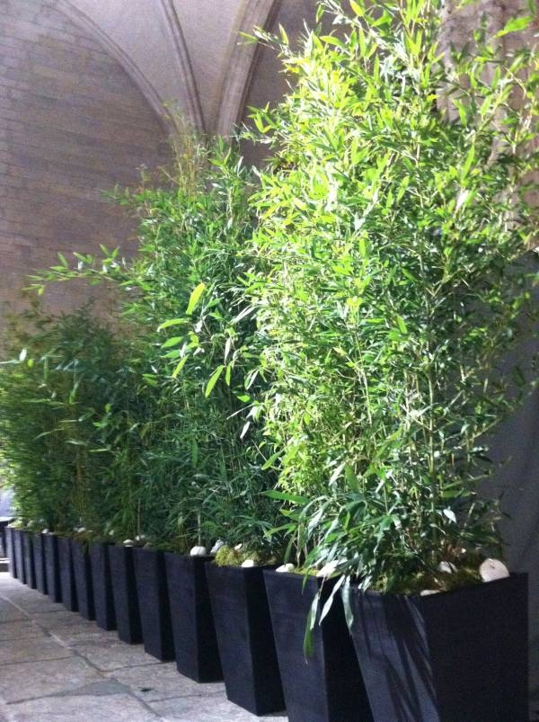 location de d coration v g tale plantes et arbustes bambous sur lille paris marseille. Black Bedroom Furniture Sets. Home Design Ideas