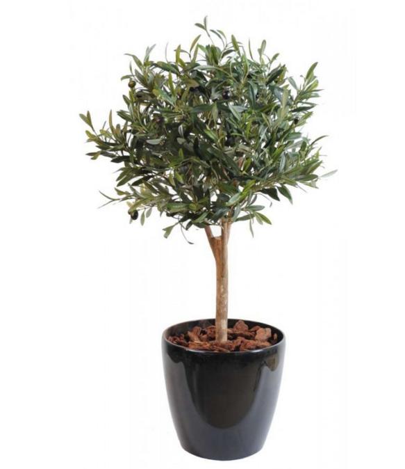 equipement pour location d coration v g tale oliviers bambous olivier d 39 ornement. Black Bedroom Furniture Sets. Home Design Ideas